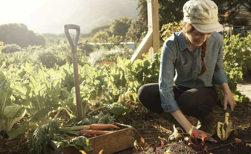 Cultive Hobbies saudáveis durante a quarentena de corona vírus